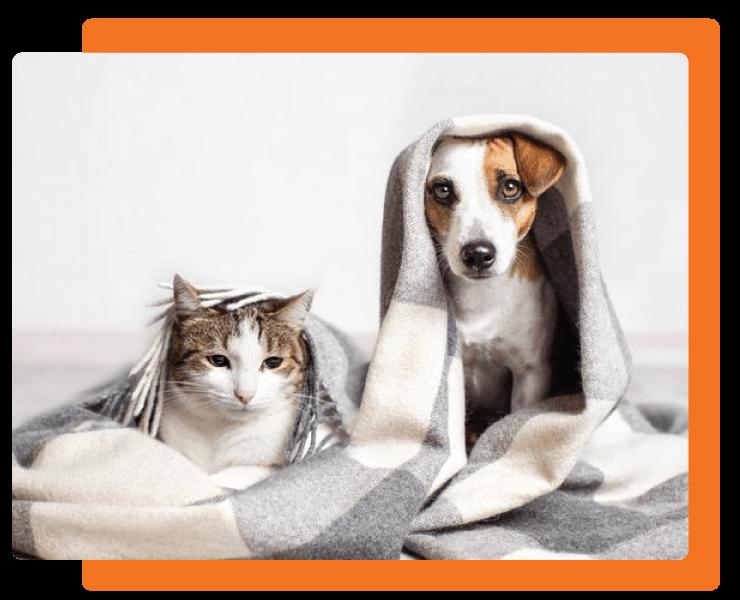 Kontakt Vethouse veterinarska ordinacija