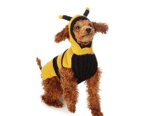 šta da radite ukoliko pčela ujede vašeg psa